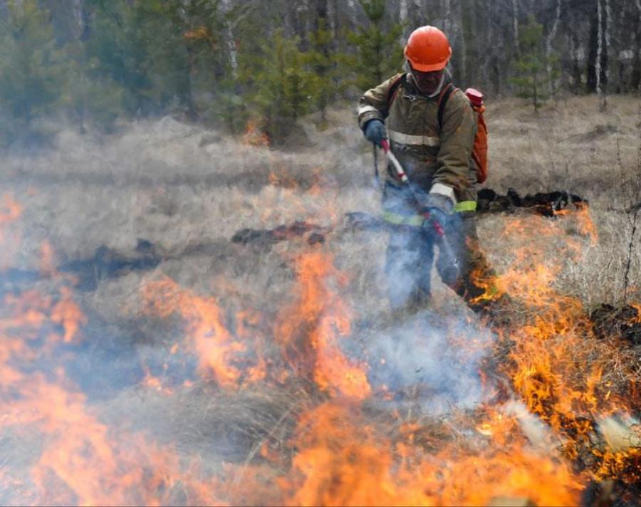 Губернатор Челябинской области получил поручение от Путина разобраться с лесными пожарами